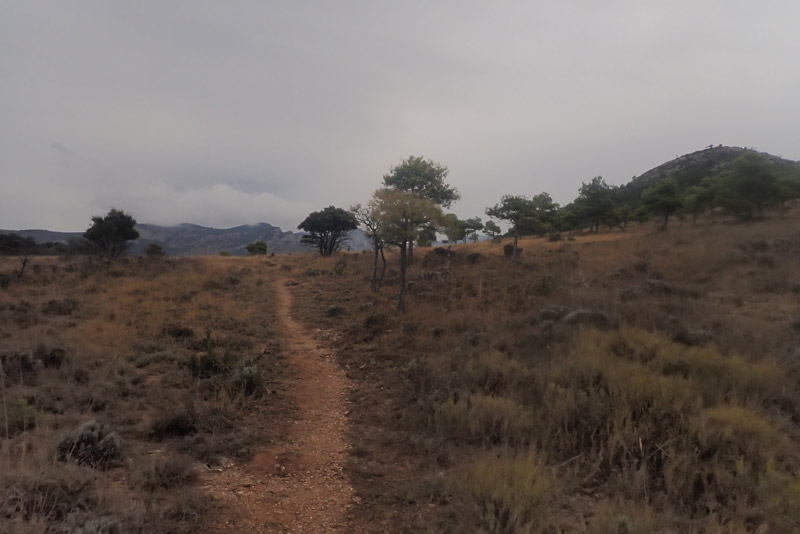 camino de retorno en los campos de Narieda Organyà